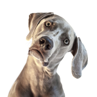 Confused-Dog